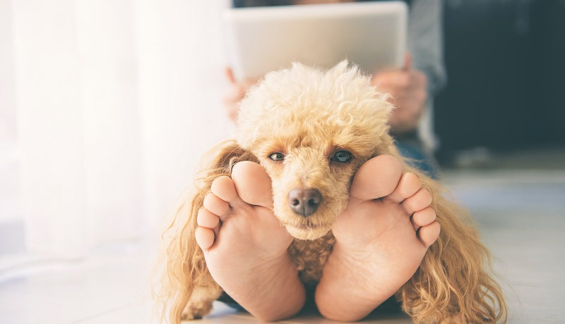 Dog resting head on it's owners legs