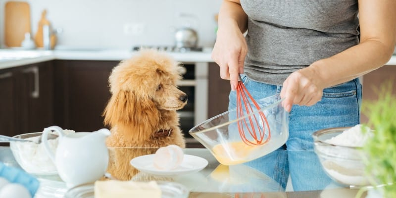 woman cooking her dog pancakes