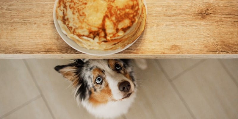 Dog looking up at pancakes on counter