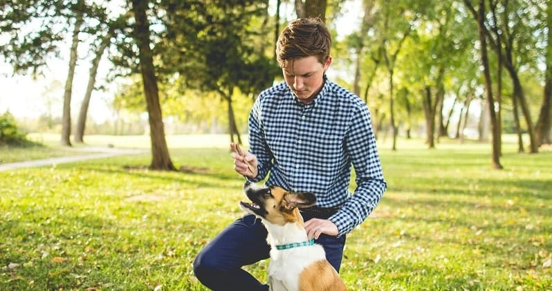 Young man and dog at the park
