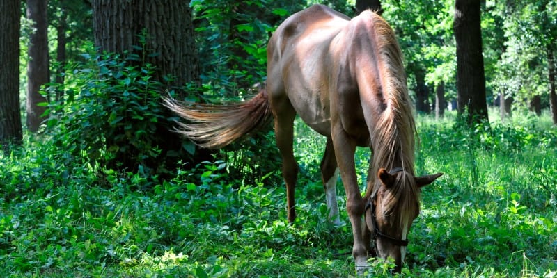Horse grazing in an old park