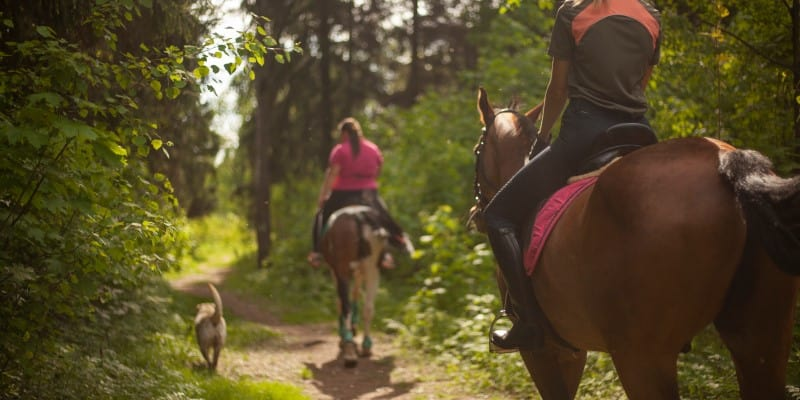 Horse trail with dog