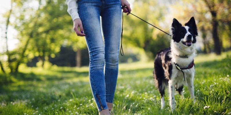 Woman walking dog on lead in park