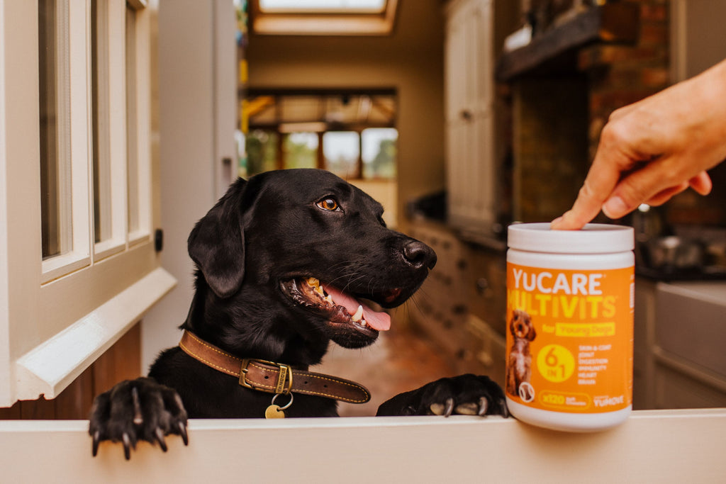 Dog excited about taking multivitamin supplements