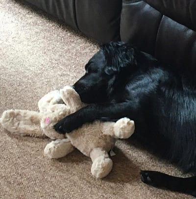 Bruce with his toy