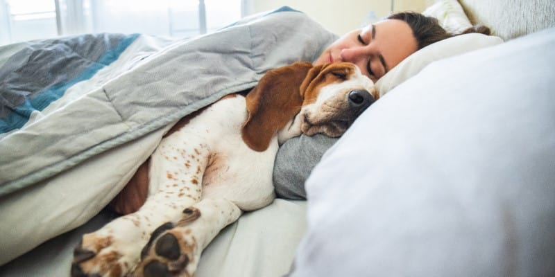 dog in bed with owner