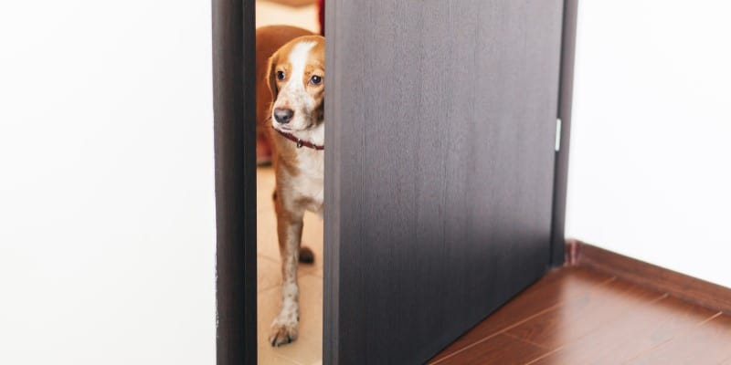 Dog waiting outside a door