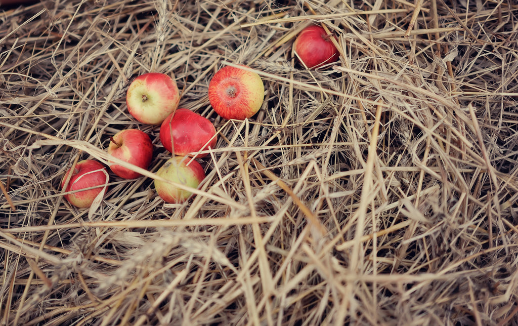 Apples sitting on a pile of hay