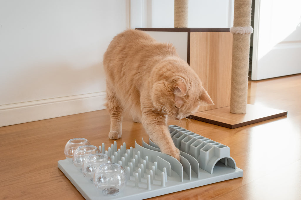 Cat playing with puzzle toy