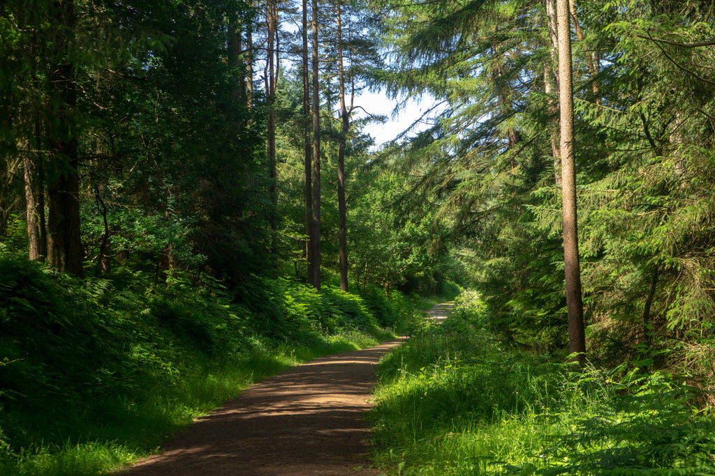 Dalby Forest, North York Moors