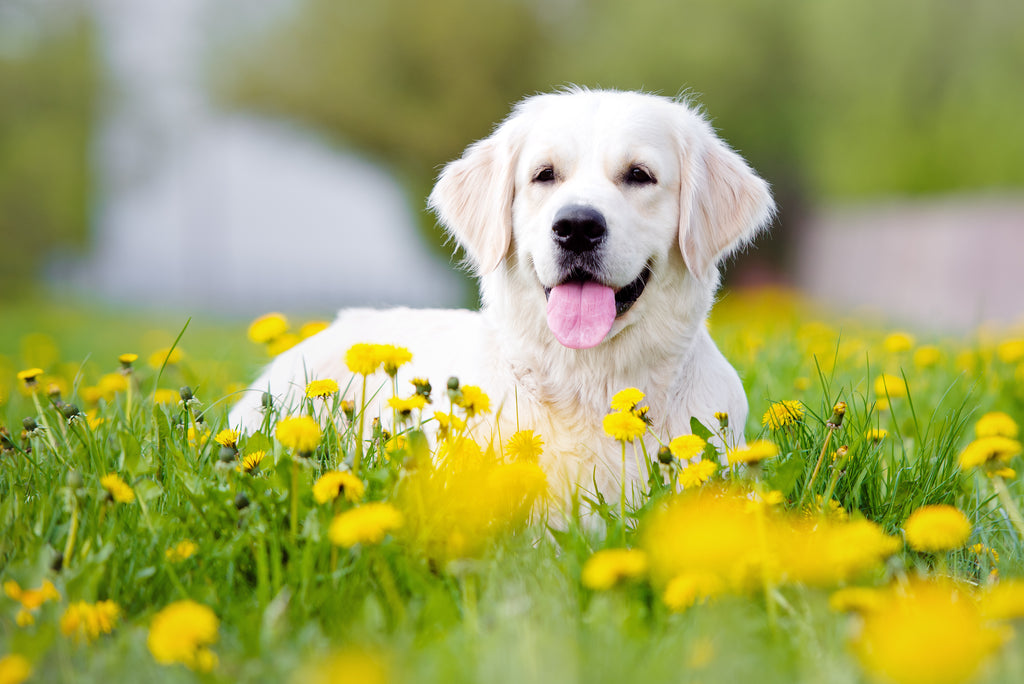 Happy dog surrounded by plants