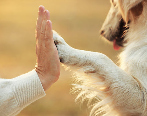 Owner and dog with paw giving high-five