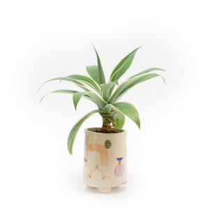 Tangerin Dream Planter 〈Agave〉