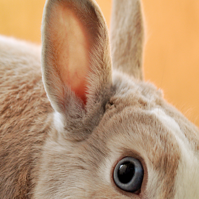What does it mean to be Cruelty-Free?