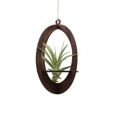 Oval Circle Air Plant Holder