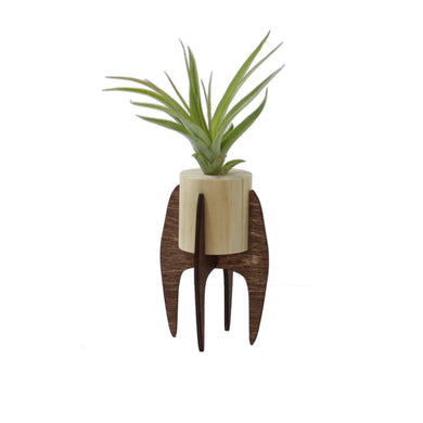 Mini Air Plant Stand With Plant