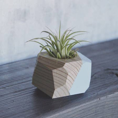 Small Geo Air Plant Holders (Multiple Color Options)