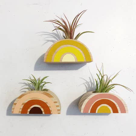Magnetic Rainbow Air Plant Holders (Multiple Color Options)