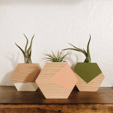 Hexagon Air Plant Holders (Multiple Color Options)