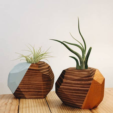 Large Geo Air Plant Holders (Multiple Color Options)