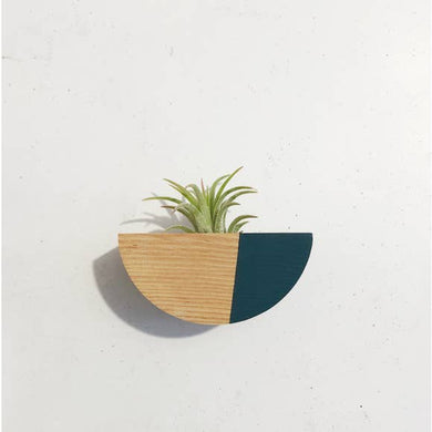 Magnetic Half Circle Air Plant Holders (Multiple Color Options)