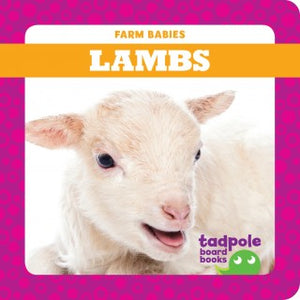 Lambs (Board Book)