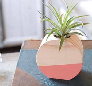 Circle Air Plant Holders (Multiple Color Options)