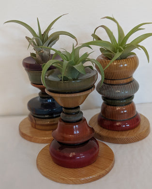 Air Plant Holders (includes air plant)