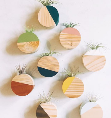 Magnetic Circle Air Plant Holders (Multiple Color Options)