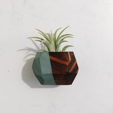 Magnetic Geo Air Plant Holders (Multiple Color Options)
