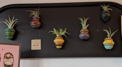 Magnetic Air Plant Holders (includes air plant)