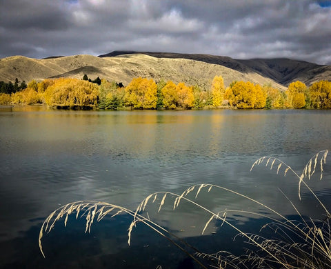 Otago colours by Lydia Blakiston