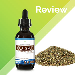Goat's Rue Tincture Extract, Organic Goat's Rue (Galega officinalis) Dried Herb - secretsofthetribe