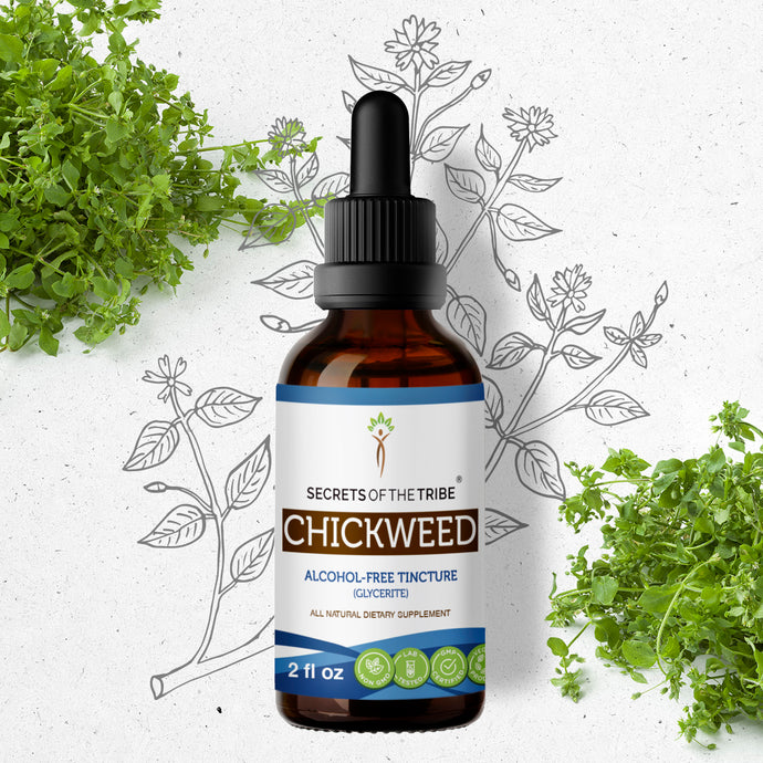 Chickweed Tincture Extract, Organic (Stellaria Media) Dried Above-Ground Parts - secretsofthetribe