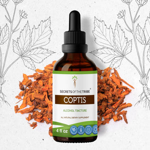 Coptis Tincture Extract, Wildcrafted Huang Lian Promotes the Health of the Digestive System - secretsofthetribe