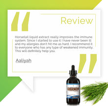 Load image into Gallery viewer, Horsetail Tincture Extract, Organic Equisetum arvense Increases Cognitive Ability - secretsofthetribe
