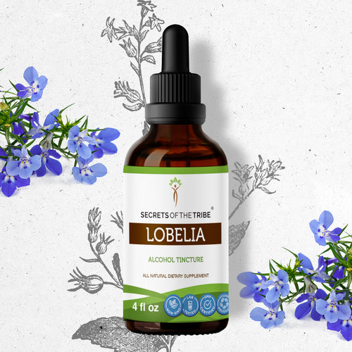 Lobelia Tincture Extract, Inflata bronchitis, May Help Reduce Symptoms of Asthma and Whooping Cough - secretsofthetribe