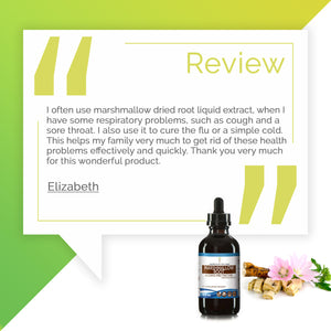 Marshmallow Root Tincture Extract, Organic Althaea Officinalis May be Beneficial for the Gastrointestinal Tract - secretsofthetribe