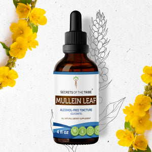 Mullein Leaf Tincture Extract, Organic Mullein (Verbascum Densiflorum) Dried Leaf - secretsofthetribe