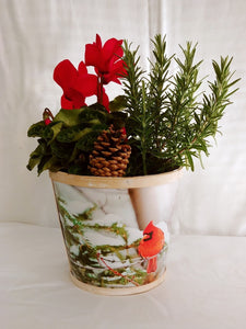 Seasonal Cardinal Planter