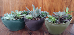 Succulent combo in oval pot