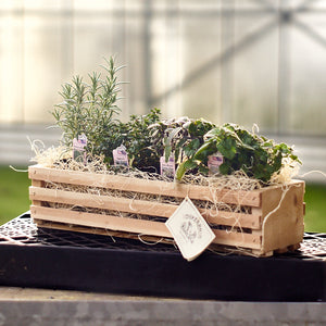 Culinary Herb Crates