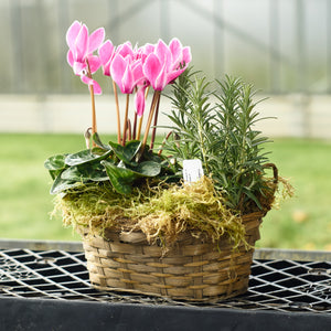 Cyclamen Herb Basket