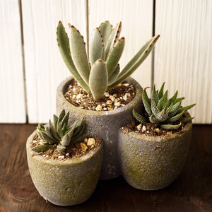 Succulent Tri-Pot, Tall