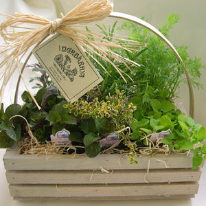 Whitewash Herb Basket