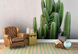 3D cactus pink background wall mural wallpaper 59