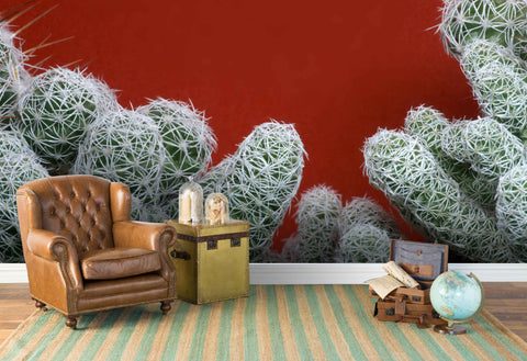 3D cactus ball red background wall mural wallpaper 47