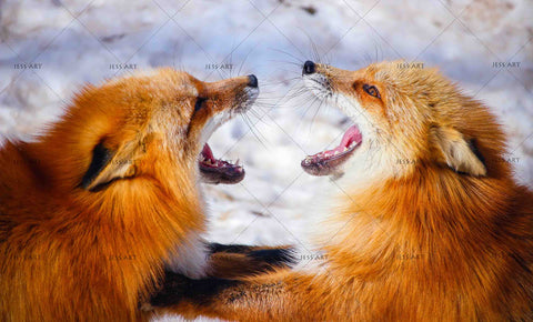 3D Red Foxes Fighting Wall Mural Wallpaper 54