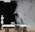 3D White Horse Black Background Wall Mural Wallpaper 08 LQH