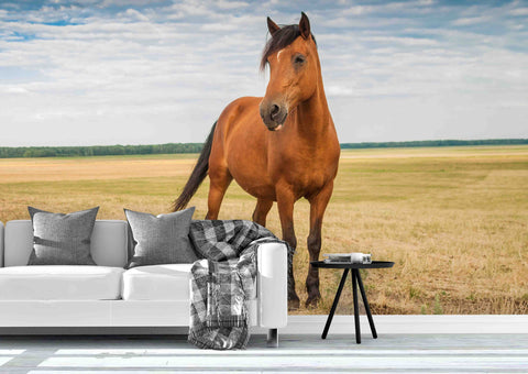 3D Young Stallion Field Wall Mural Wallpaper 76